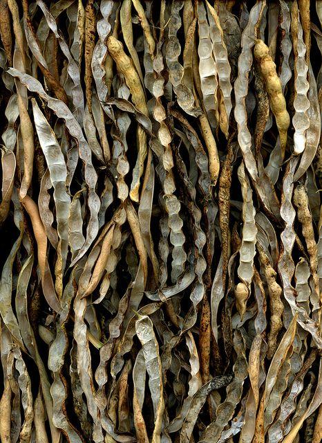 algas http://floresentuensalada.blogspot.com.es/
