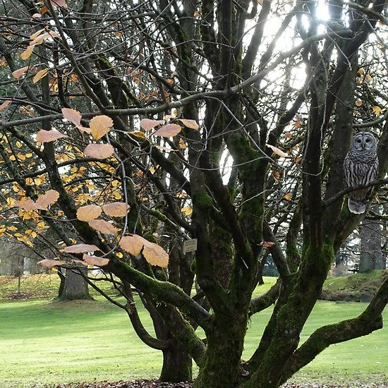 Trees and owl in a botanical garden.