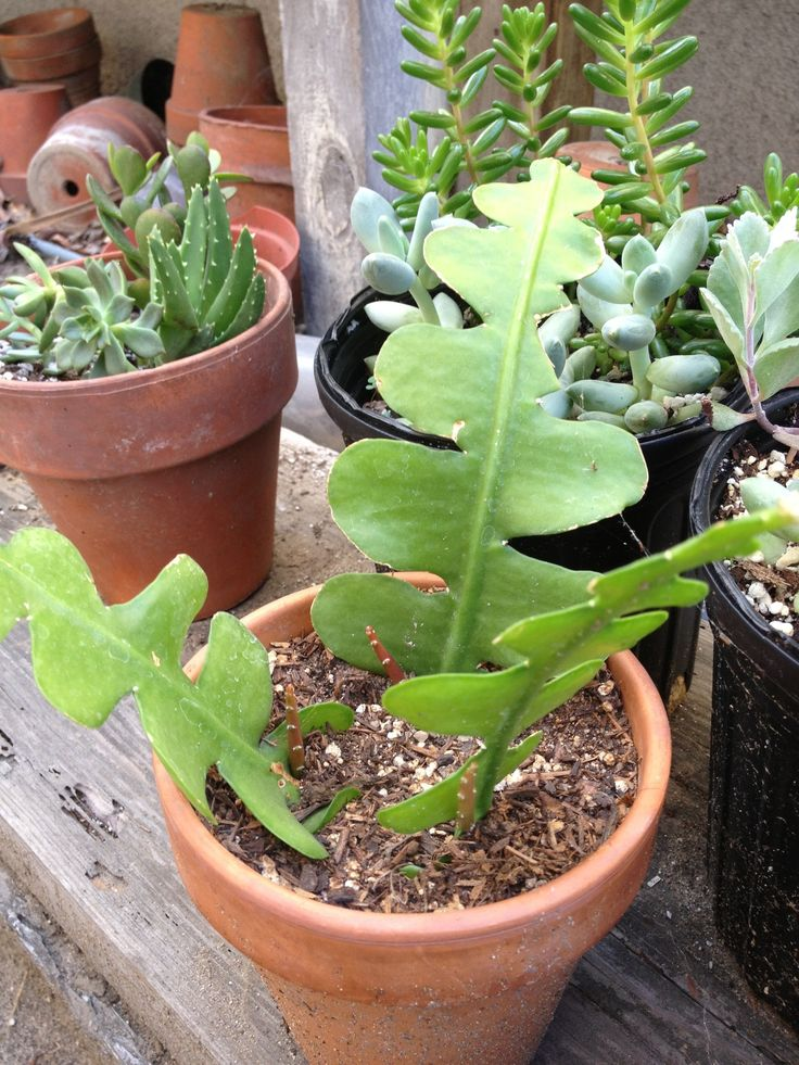 how to take cuttings from succulents plants