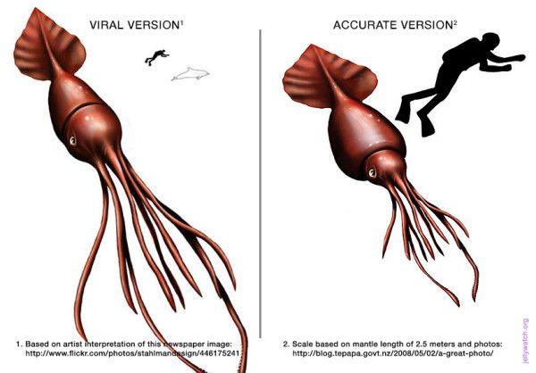 Squids colossal squid essay example