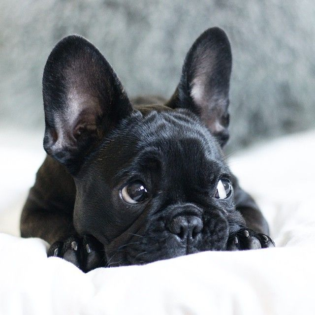 The 14 Most Adorable, Derpalicious, Swag Instagram Pups To Follow in 2015