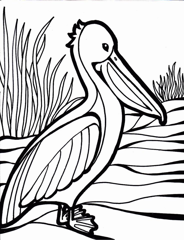 pelican bird coloring pages - Printable Coloring Pages Birds