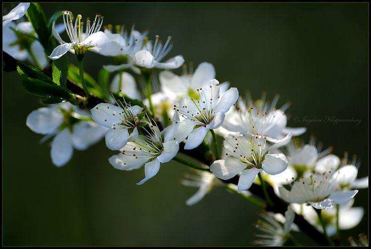 kissed_by_spring_by_ingelore-da077k0.jpg (832×559)