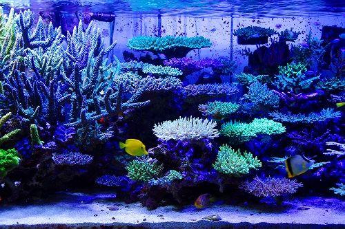 Japanese Reef Tank | Saltwater aquarium tanks, Aquarium ...