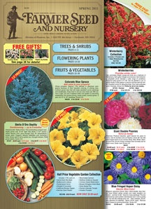 Seeds and plants. Good prices.