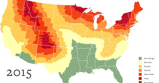 The SmokyMountains.com fall foliage leaf prediction map. and great science lesson along with the map