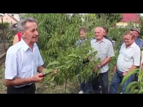 Ivan Hričovský: Aby broskyne rodili - YouTube