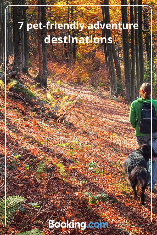 7 Pet Friendly Adventure Destinations Booking Com Adventure Destinations Adventure Camping Destinations