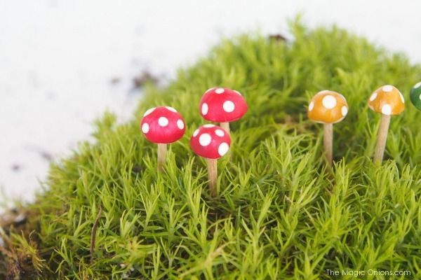 We made the most adorable clay toadstools for our fairy garden.   You won't believe how easy they are to make. All you need is : * Sculpey clay (from a craft store) * toothpicks * paint and a paintbrush   Break off a small amount of clay (about the size of your … … Continue reading →