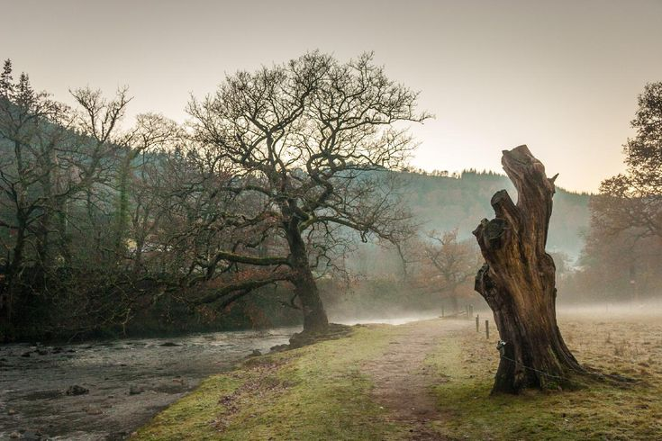 Trees in the mist 3 / Clickasnap