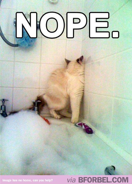 When you try to bathe a cat. #catLady #lol #animals