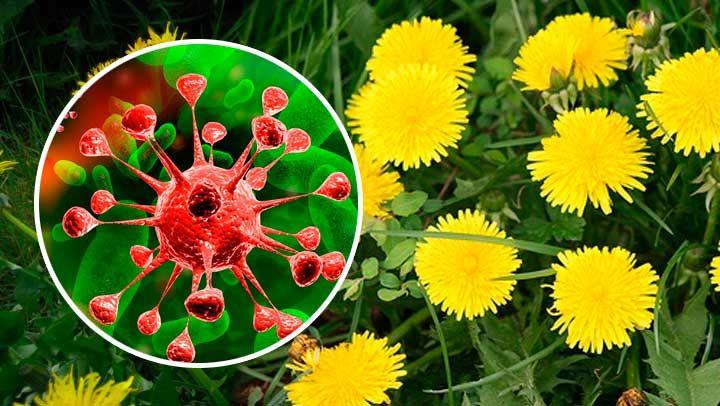 79 best images about Plantas medicinales on Pinterest
