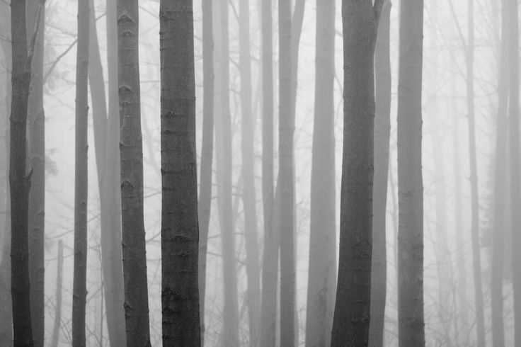 Fog between the lines - One of foggy days in snowless winter 2014.