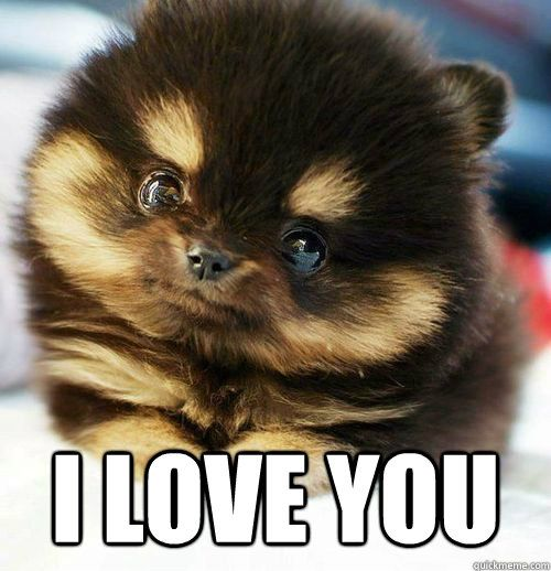 funny puppies with memes Stuff I Like!, I Love You Puppy Meme ...
