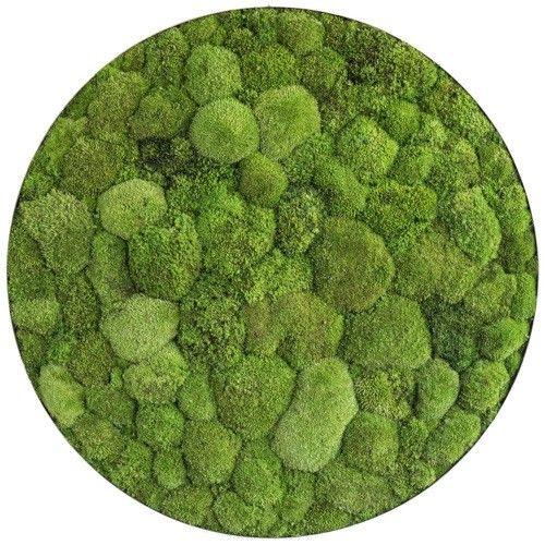styleGREEN! Verticale tuinen voor aan je muur. Voor het eerst een betaalbare en duurzame oplossing.  styleGREEN! 100% natuurlijk, 0% onderhoud, altijd groen.   Deze fraaie ronde tuinen met 2 soorten mos zijn ware eye-catchers. Erg fraai om meerdere afmetingen met elkaar te combineren.   Small: Ronde verticale tuin 'flat and pole moss' met een diameter van 34 cm Medium: Ronde verticale tuin 'flat and pole moss' met een diameter van 54 cm Large: Ronde verticale tuin 'flat and pole moss' met…