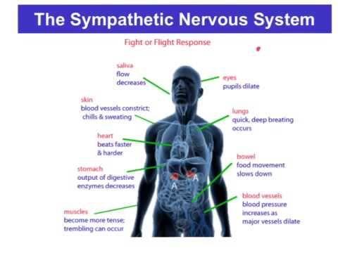 Whole Food For Parasympathetic Nervous System