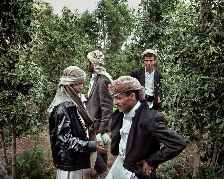 Al-Mahweet, Yemen, August 2010 - Outside the city walls - Qat farmers giving merchants plastic bags with qat leaves. Then qat will be sold at the market. © Lorenzo Meloni/contrasto