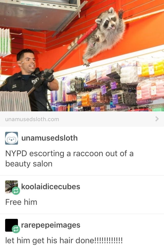 NYPD escorting a raccoon out of a beauty salon