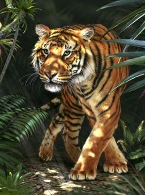 Tiger by David Penfound