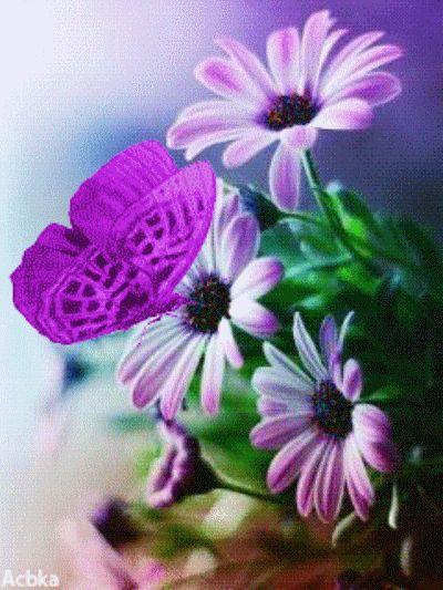 Fleurs et papillons fleurs pinterest papillon fleur for Fleurs et fleurs