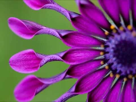 Ho'oponopono | Releasing & Healing The Past | Theta Brainwaves - YouTube