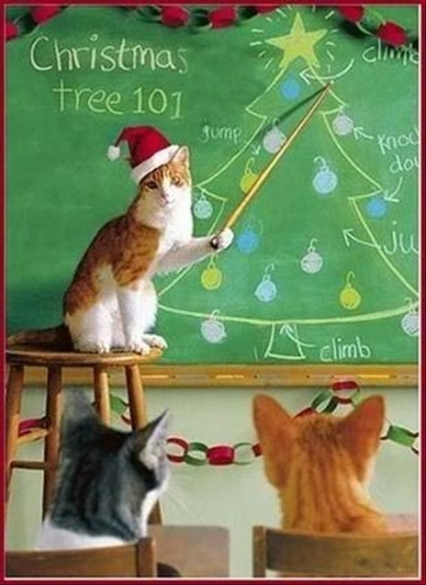 Funny Christmas Pictures – 30 Pics