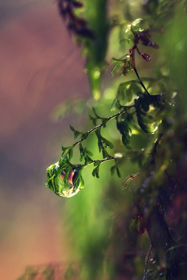 Rainforest Droplet by Jamie Glessal, via 500px