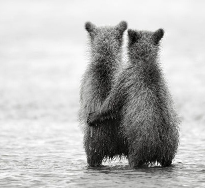 Hug hug: Photos, Animals, Nikolai Zinoviev, Bears, Quote, Friend
