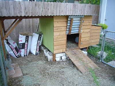23 best images about ducks on pinterest guinea pigs for Duck houses and runs