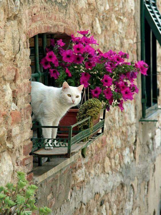 NEAT LITTLE BALCONY FOR THIS CAT - WHO LOVE TO WATCH THE NEIGHBORS................ccp