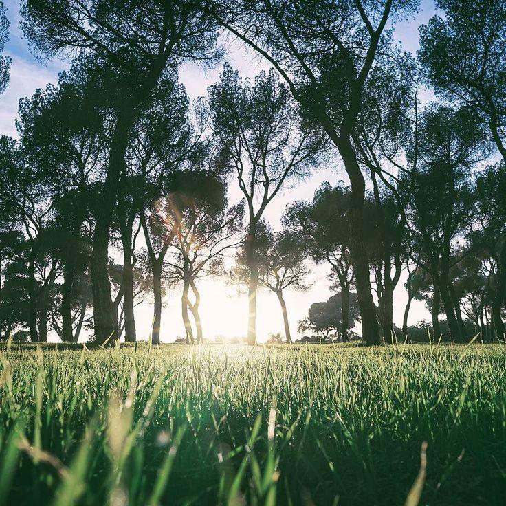 En el patio de la casa de campo. Madrid España . Foro por Alberto Restifo . . #madrid #españa #travel #landscape #grass #alavaca #viajar #spain www.alavaca.com #viajar #alavaca #travel #inspiration #vacations #vacaciones #alquiler #vacationalrental