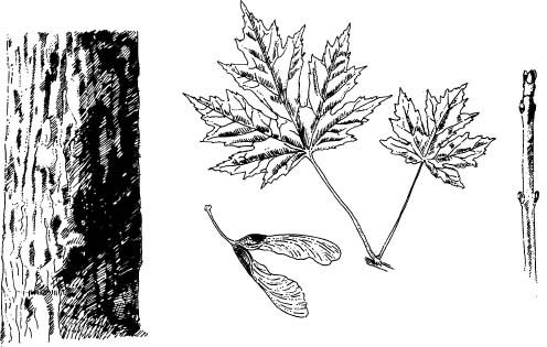 54 best Invasive Plants of Cape Breton images on Pinterest