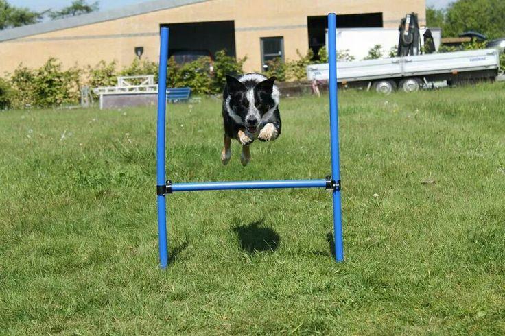 Flyv hund!!