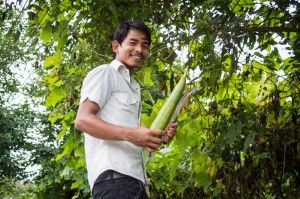 """I'm trying to find the biggest ghiraula in the tree.""#nepal #food #homegrown"