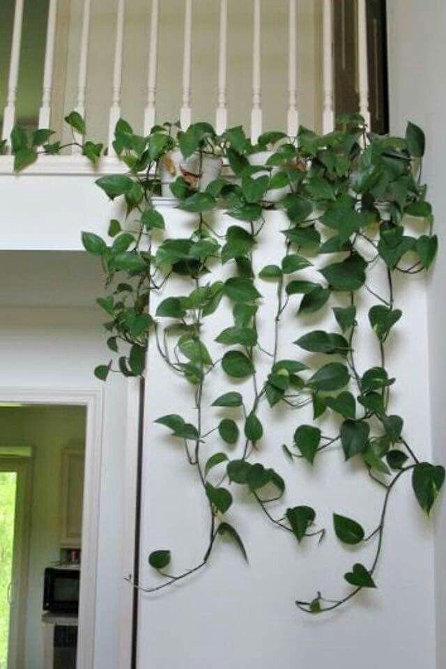 Künstlich Efeu Blatt Pflanze Laub Trailing Ivy Leaf Plant Foliage Hanging Decor