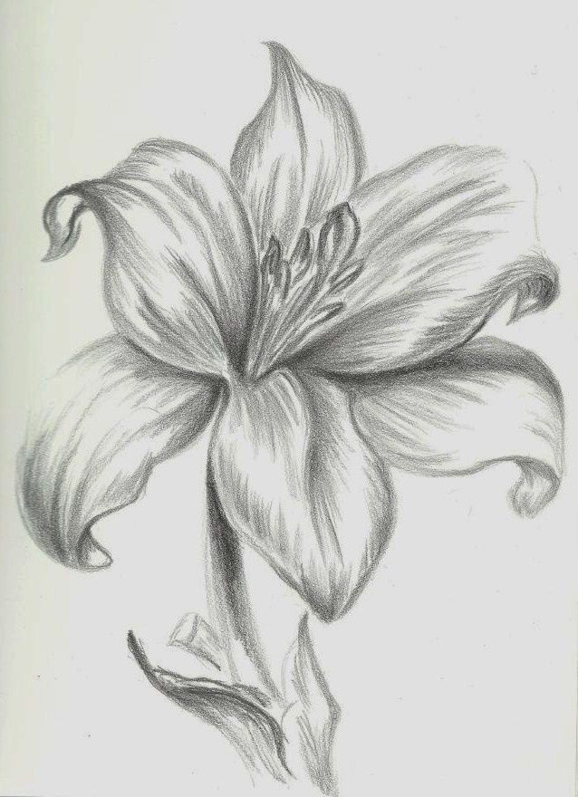 Картинки для срисовки цветы карандашом легкие