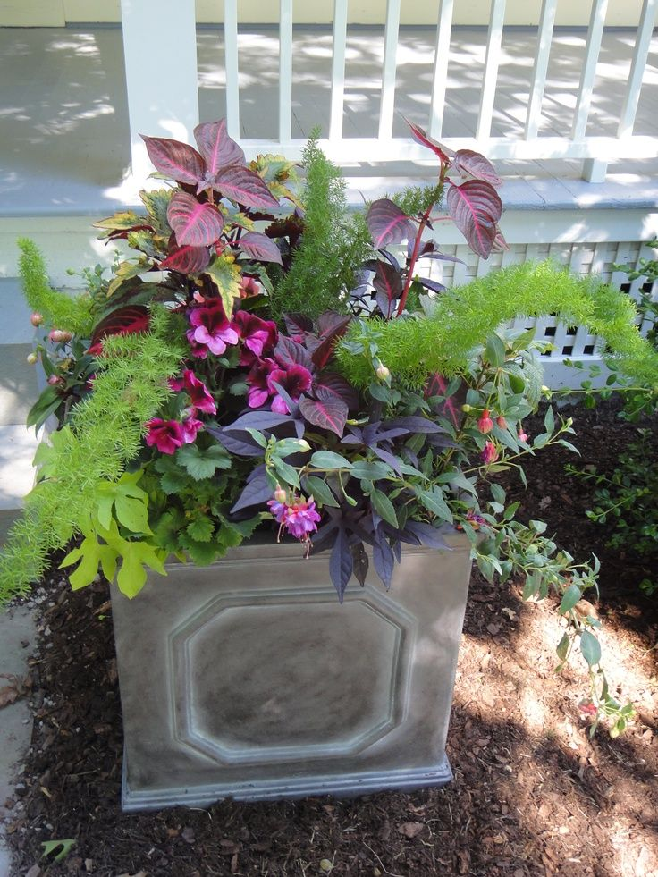 17 best images about shady border on pinterest gardens container gardening and shade plants - Container gardens for shade ...