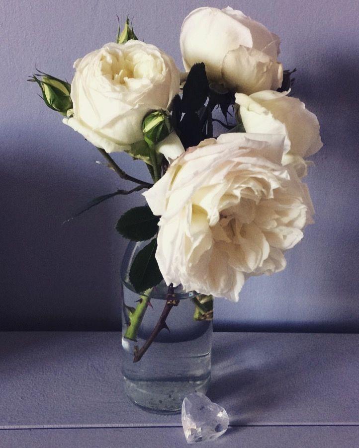 "Sir Edmund Hillary Roses on Dulux ""Kingston"" colour back drop"