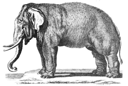 File:Pennant Thomas Hist of Quadrupeds 1793-Elephas.png