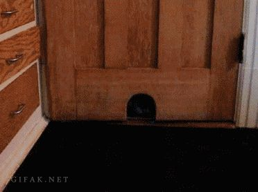 Our favorite cat gifs…OMG I have been laughing so hard!!!