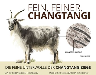 "Check out new work on my @Behance portfolio: ""Chantangi Wool, a hairy infographic"" http://be.net/gallery/52229793/Chantangi-Wool-a-hairy-infographic"