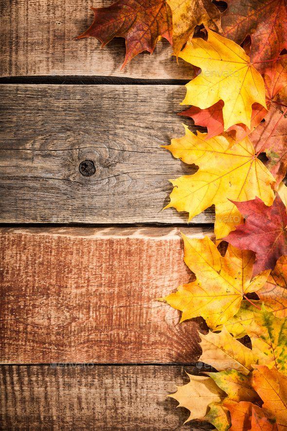 Thanksgiving Wallpaper Iphone Autumn Background With Maple Leaves En 2019 Fondos De