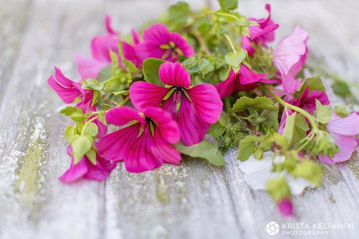 Kukkia ja juhlia
