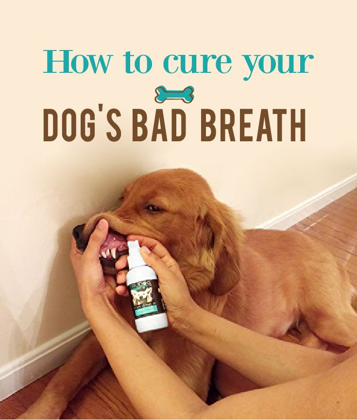Natural Cure For Dog S Bad Breath