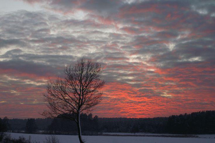 Winter morning, Village, Forest, pink, purple sunset, snow