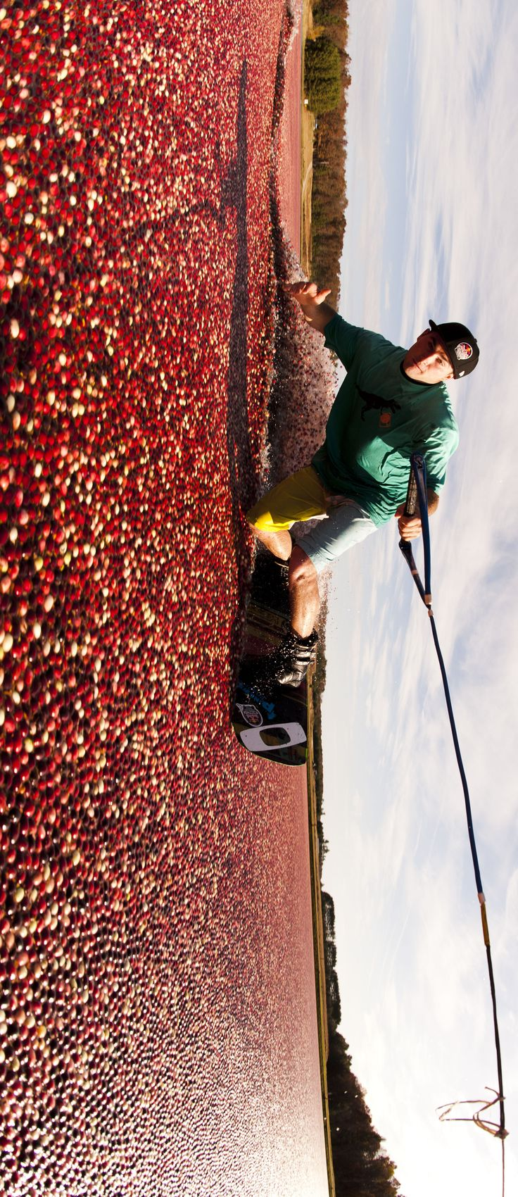 Okay, so I'm guilty of wanting to jump into the cranberry pool on the ocean spray commercials so I would probably do this if given a chance....