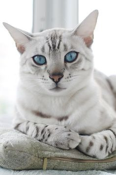 Corporation Cats : Photo