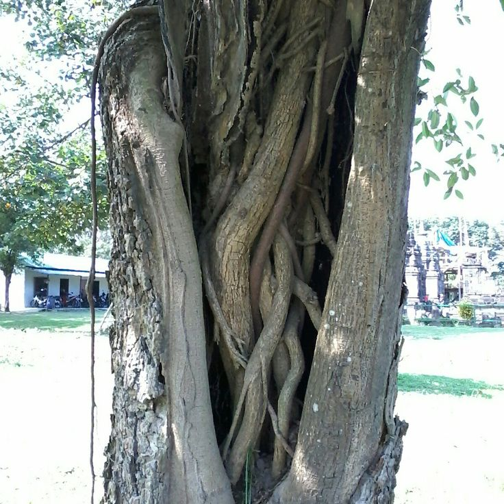 Unique tree.