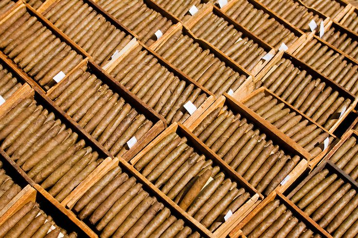 Cigars dried in the sun in Rizona Baru cigar factory, Temanggung, Central Java.