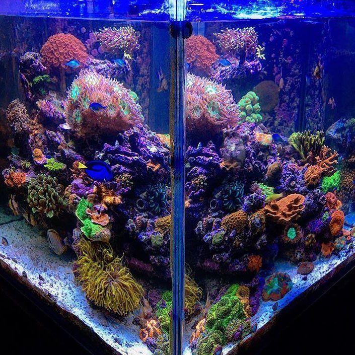 The #Polyplab #ReefPro @new0cean . . . #coral #reeftank #coralreeftank #reef #reefpack #reef2reef #reefcandy #reefersdaily #reefrEVOLution #coralreef #coraladdict #reefaholiks #reefjunkie #reeflife #instareef #allmymoneygoestocoral #instareef #reefpackworldwide #ilovemyreef #rarecorals #reefing #exoticcorals #reefporn #reeferdise #reefers4reefers #coralporn #aquarium #polyplab